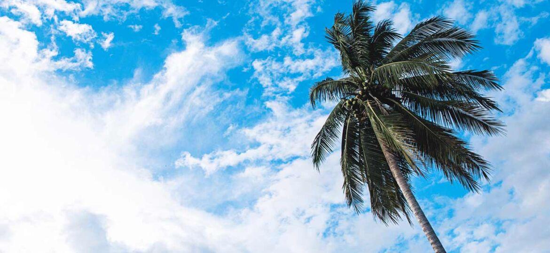 Diseño tropical y caribeño